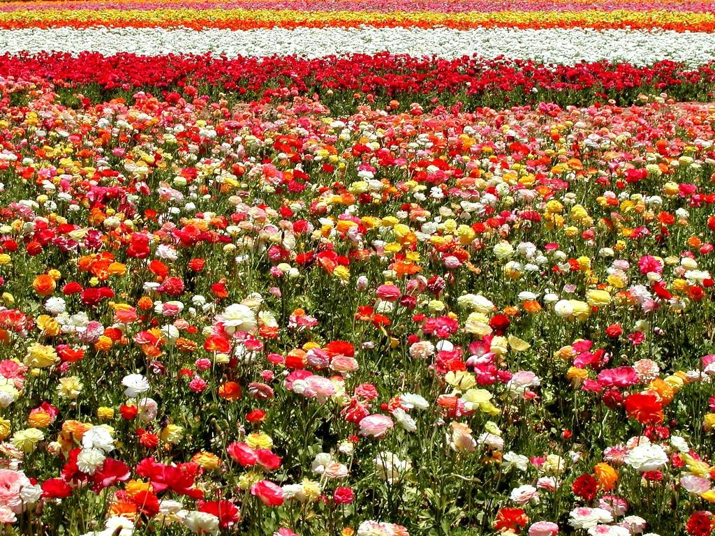 jardin de las flores com:
