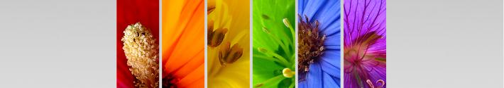 Esencia Arte Floral